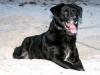 doggie_beach
