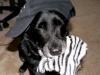 doggie_hat_toy