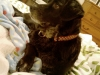 doggie_in_bed