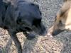 doggie_k9_kisses