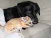 doggie_lickin_scout_head
