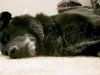 doggie_sleeping_carpet_02