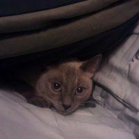 Falcore Hiding