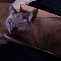 Falcore in a box