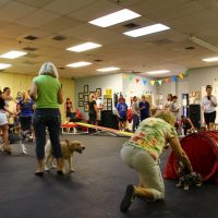 Full class at the dog training academy of south florida