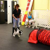 IMG 7599 200x200 Puppy Class at The Dog Training Academy