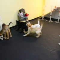 IMG 7647 200x200 Puppy Class at The Dog Training Academy