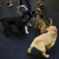 IMG 7673 200x200 Puppy Class at The Dog Training Academy