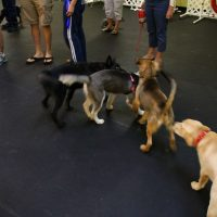 IMG 7675 200x200 Puppy Class at The Dog Training Academy