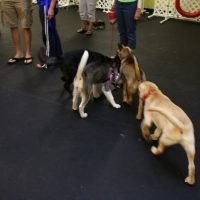 IMG 7676 200x200 Puppy Class at The Dog Training Academy