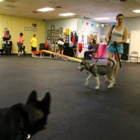 Luna at Puppy Class