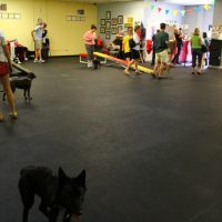 Luna waiting anxiously for puppy play time at puppy class.