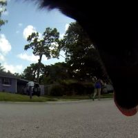 Luna The Wolfdog GoPro photo of a neighbor sweeping