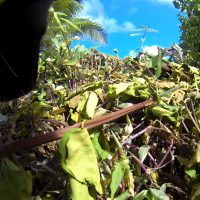 Luna The Wolfdog GoPro photo of some branches she was sniffing