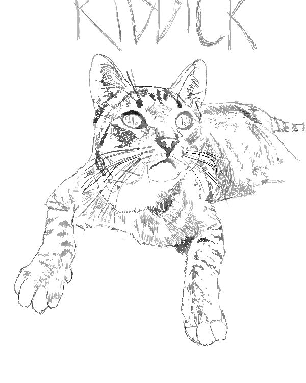 Drawing of Riddick The Cat