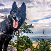 Hiking with Luna The Wolfdog