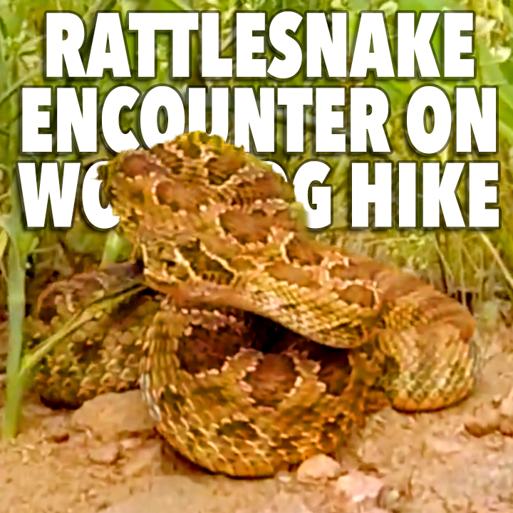 rattlesnake hike encounter