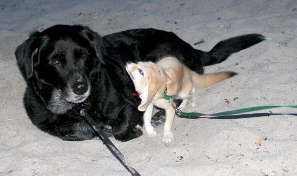 Scout & Doggie Snuggling at the beach in south florida