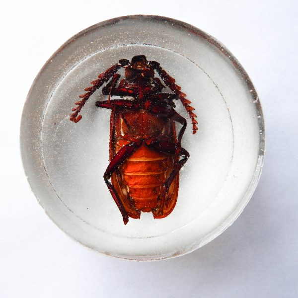 Resin California Root Borer Beetle Paperweight