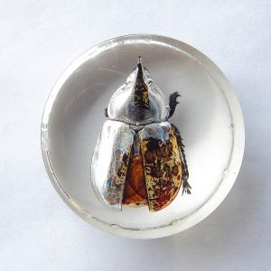 Hercules Beetle Resin Paperweight
