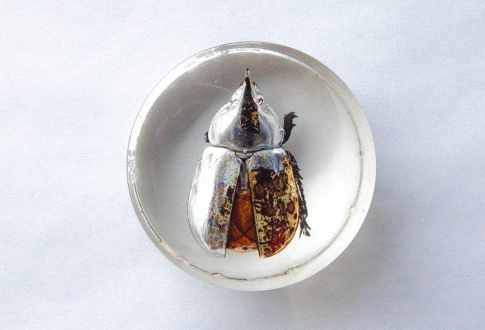Hercules Beetle Resin Paperweight