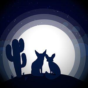 Fennec Fox Desert Moon