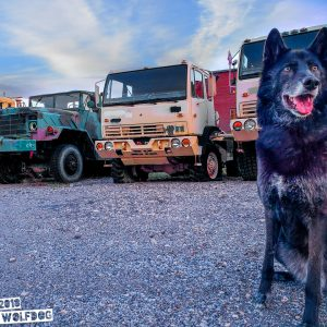 luna the wolfdog big trucks