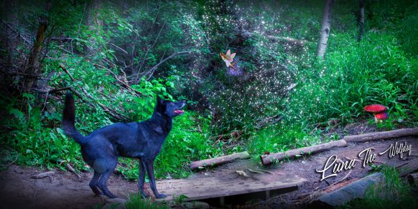 Luna the Wolfdog Forest Fairy